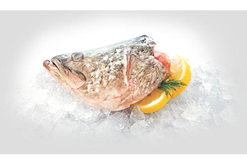 Barramundi Fish Head